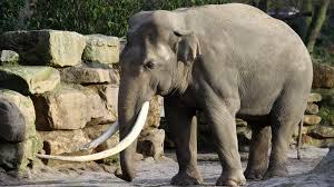 dierentuin korting